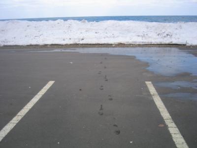 道南釣の旅-2010-/海アメから見放されたか