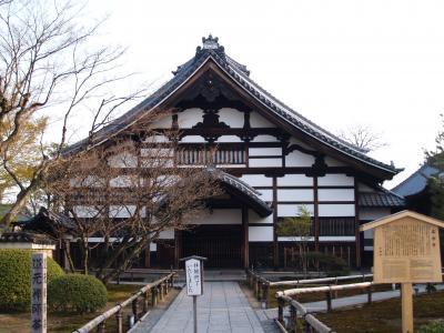 京都高台寺の枝垂れ桜
