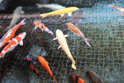 「長岡の奥座敷」蓬平(よもぎひら)温泉 極上の湯
