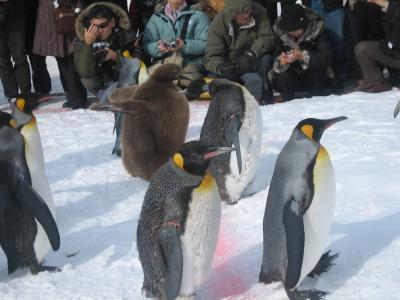 ペンギンのお散歩と雪見風呂