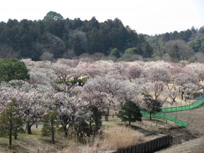 日帰り一人旅【茨城県】② 千波湖と桜山