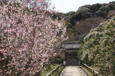 「関西花の寺二十五ヵ所」 浄瑠璃寺、岩船寺、般若寺の参拝