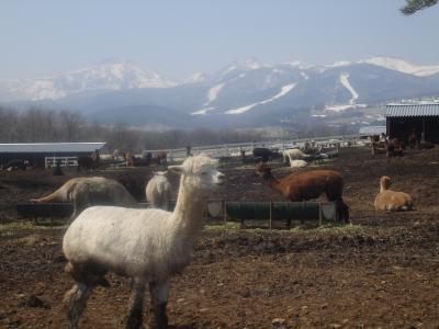 クラレに会いに~那須・アルパカ牧場~