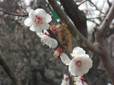 水戸2010 梅まつり