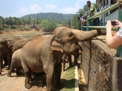 [スリランカ] ピンナワラ・象の孤児院 vs デヒワラ動物園 ライバル対決