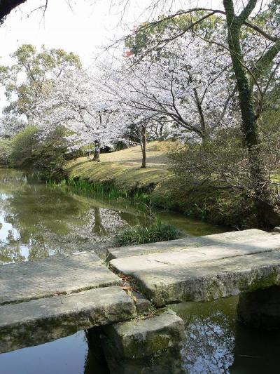 桜さくら 諫早編