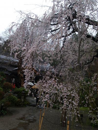 山形−桜巡りツアー