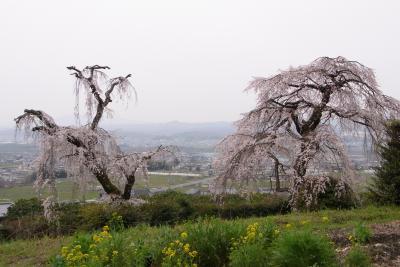 山背古道のお花見:地蔵禅院など