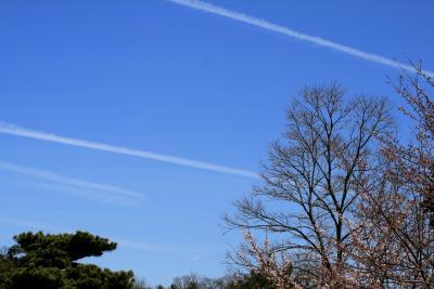 2010春、五分咲の五色園の桜(1):3月30日(1):ソメイヨシノ、ヤマツツジ、大安寺本堂、森夢幻師立像