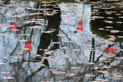 2010春、五分咲の五色園の桜(4:完):3月30日(4):ソメイヨシノ、睡蓮、親鸞聖人像、信行両座の場面