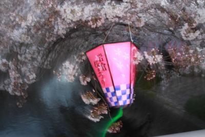 2010年五条川の桜