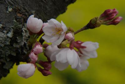 春の南山城花めぐり
