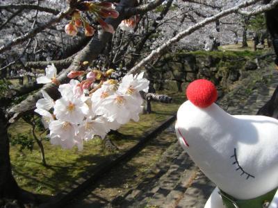 和歌山で花見でくたっと♪