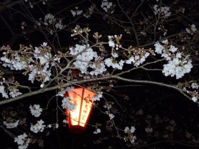 「2010年高知の桜②」今年は何度も行っちゃった『高知城近辺』