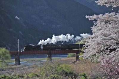 MTBでウロウロ…=④ 桜咲く大井川鉄道のSL(上り)=