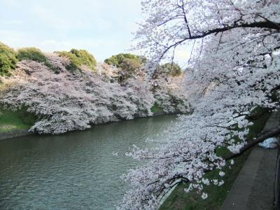 東京の桜 千鳥ケ淵・靖国神社の巻