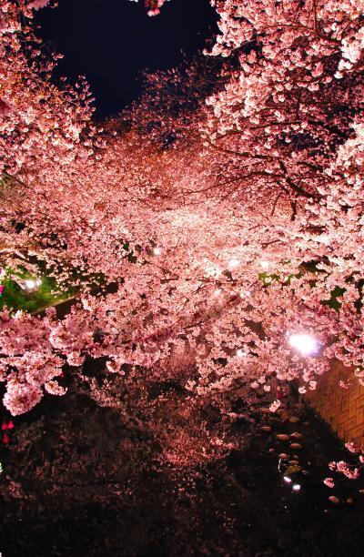 japanese soul flower