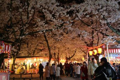 京都@夜桜、楽しみました~平野神社