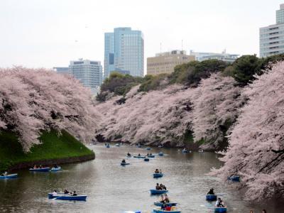 お江戸の桜は千鳥ヶ淵より ◇お江戸散歩(4)◇