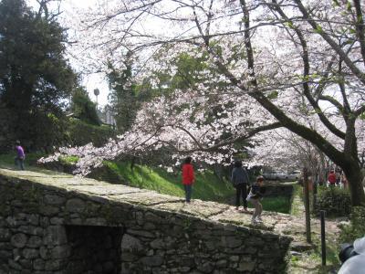 福岡県朝倉市秋月の桜とバングラデシュのカレー
