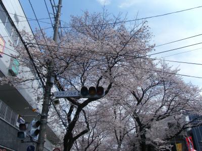 おばあちゃんと桜を見に、常磐平さくらまつりへ(*^_^*)