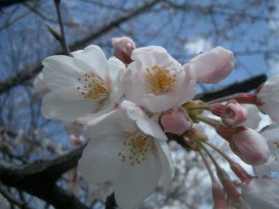 清澄公園でお花見。しずかなところです。