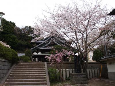 龍口寺の桜-2008年