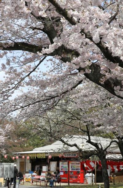 ひとり旅 [714] 広島市内の桜名所で\(^o^))/…\((^0^)/さくらが満開でした!<比治山公園&黄金山緑地>広島市南区
