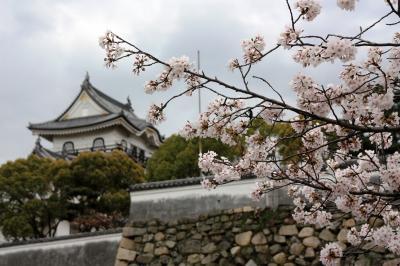 【大阪桜2010】 歴史とだんじりの町のシンボル 「岸和田城」