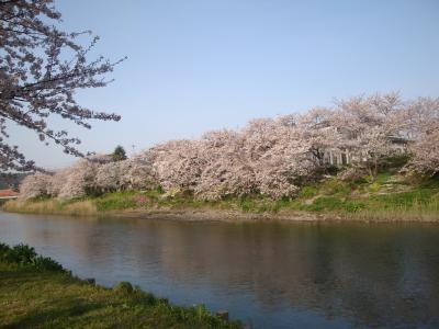 ☆2010花見② 勝間田川&パターゴルフ