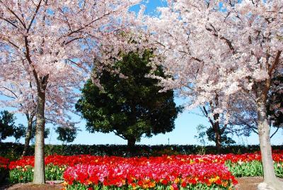 春だから花が見たい! 桑名へ