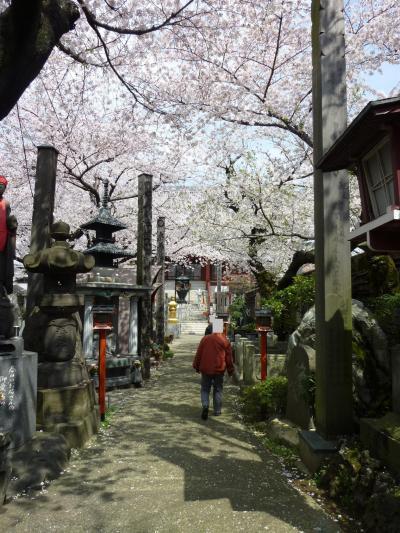 東京まちさんぽ 春と歴史のかおる下町さんぽみち