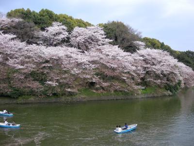 東京駅から皇居→桜吹雪の千鳥ヶ淵へ