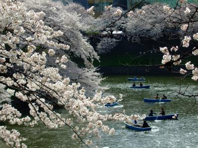 桜が繋ぐ春の記憶・2010さくら色の午後≪千鳥ヶ淵‐靖国神社‐外濠公園≫