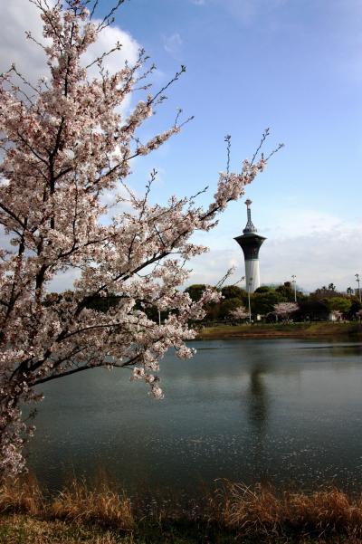 【大阪桜2010】 花の万博20周年 「花博記念公園鶴見緑地」