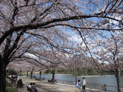 東京・浮間公園(お花見2010)