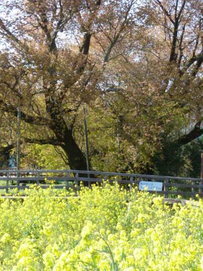 ほっこり熊本【03】阿蘇の雄大な風景は心のふるさと