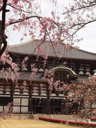 今年は奈良でしょ。奈良公園名所めぐり♪