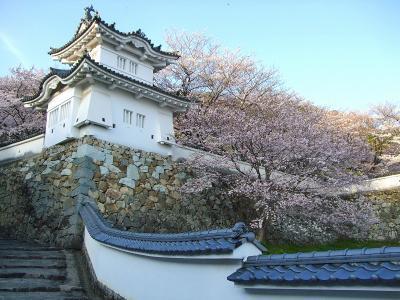 播州の小京都・龍野の3000本桜!(龍野城)