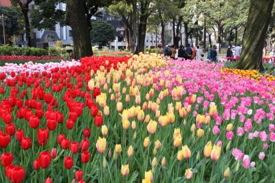 横浜公園チューリップまつり&赤レンガ倉庫フラワーガーデン