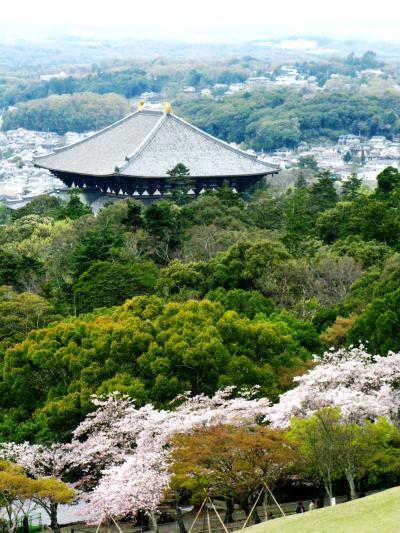 奈良-7 新芽吹く若草山からの眺望 ☆万葉七草釜飯の昼食後に