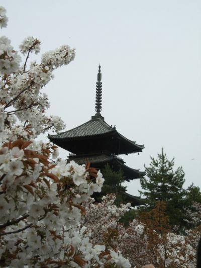 2010年春・スルッとKANSAIで東へ~仁和寺の桜~
