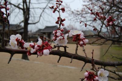 春の韓国 【忠清南道】 禮山・牙山