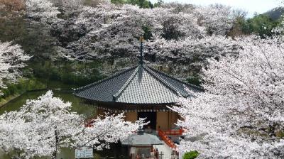 2010年 奈良お花見へ