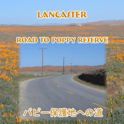 Road to Poppy Reserve   パピーリザーブ への道