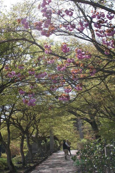 88歳とダンナと私の3人ドライブ! 新緑の中…みどりの紅葉と春の丹波路…と道の駅(青垣)の二八そば