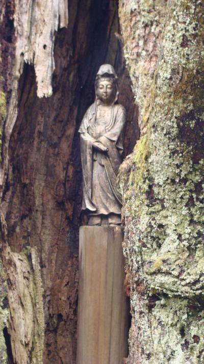 香林寺の枝垂れ桜・・・市指定の天然記念物