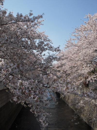 ☆ 中野~新宿 絶景穴場の桜スポットサイクリング ☆