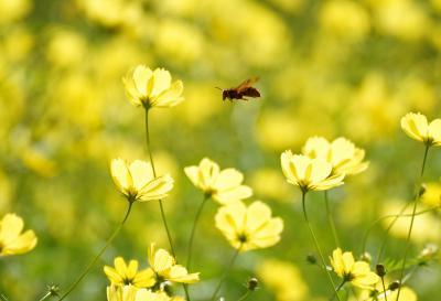 ★Japan ~ミツバチばあやの冒険~ 日本編サイトマップ