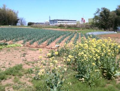 野庭農業専用地区へ